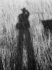 Texas western shadow